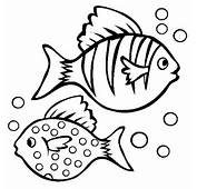 Fish Coloring Pages  Pictures
