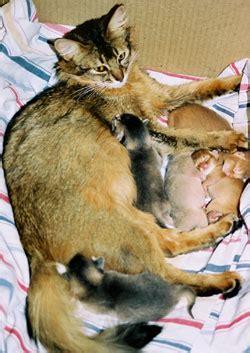 wann kastrieren katze tierarzt kl 228 rt auf das ist der richtige zeitpunkt um