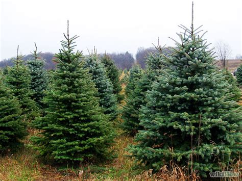 recycle live christmas trees in brentwood and franklin