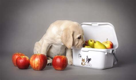 superfoods for dogs 9 superfoods for dogs that improve their health according to science couture