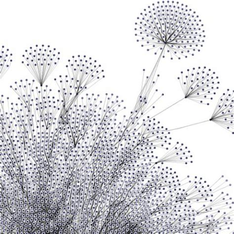 patterns in nature dot point answers styleshoutout com mathematics and nature geometry
