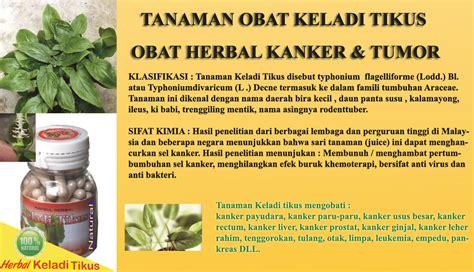 obat herbal kanker tanaman keladi tikus sehatherbacom