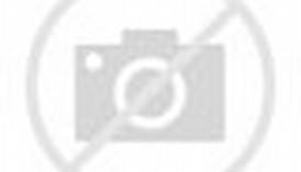Can Horses Swim Underwater