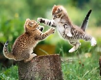 Funny Animals: Cats Fight fun Photos