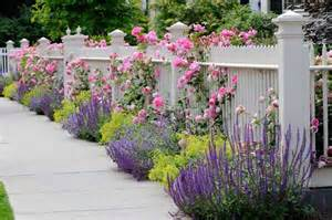 lavender along fence ironwood landcrafters inc