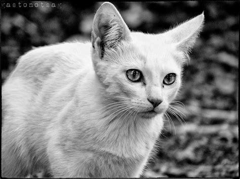 imagenes de animales en blanco y negro f animales en blanco y negro taringa