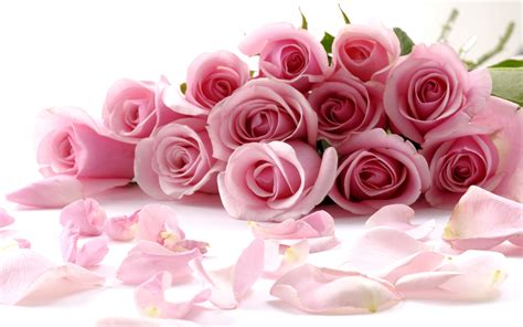wallpaper romantic pink romantic pink roses wallpaper