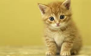 Cute-<strong>Kitten</strong>-<strong>kittens</strong>-16096566-1280-800.jpg