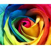 Tags Colorful  Rose Wallpapers