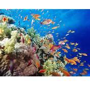 Fish Beautiful And Colourful Wallpaper