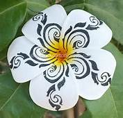 Frangipani Hawaiian Flower Butterfly Tattoo On Pinterest