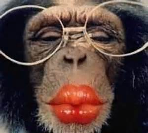 monkeylipsglasses funny photos and funniest images