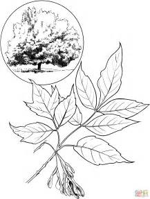 coloring page of maple tree japanese maple tree coloring pages