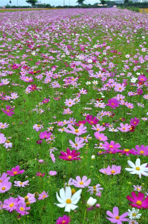 Minisoda B B Yilan Taiwan Asia 359 best taiwan images on taipei taiwan asia