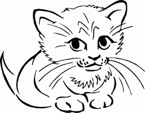 easy coloring pages of cats easy coloring pages cute cat 484661 171 coloring pages for