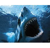 It's The Most Wonderful Time Of Year Shark Week Cue Jaws