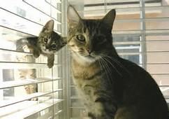 Mom & Baby Cat Kitten