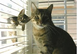 Funny Cats and Kittens