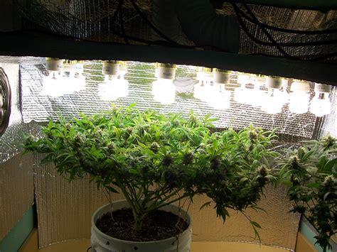 lights in grow room enough indoor lights
