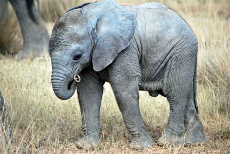 photo essay kenya wildlife amboseli national park