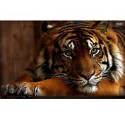 If You Like Wild Animals And Cats Will This Cool Awesome