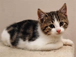 <strong>kitten</strong>_lily.jpg