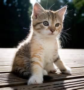 <strong>kitten</strong>-1.jpg