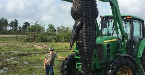 Snapped Hunters Catch And Kill 15ft 800lb Alligator Alligator Killed In Florida 15ft And 100