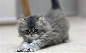 Cute-<strong>Kitten</strong>-<strong>kittens</strong>-16123151-1280-800.jpg