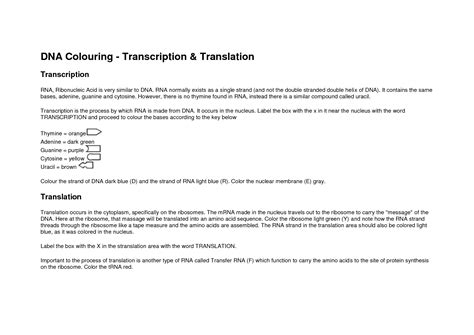 Dna Rna Translation Worksheet