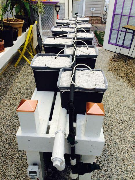 hydroponic pioneer dutch bucket hydroponic system