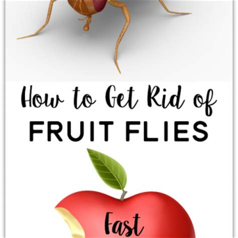 7 Ways To Get Rid Of Fruit Flies by Household Tips Archives Yesterday On Tuesday