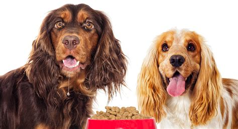 best puppy food for sensitive stomach best food for sensitive stomach