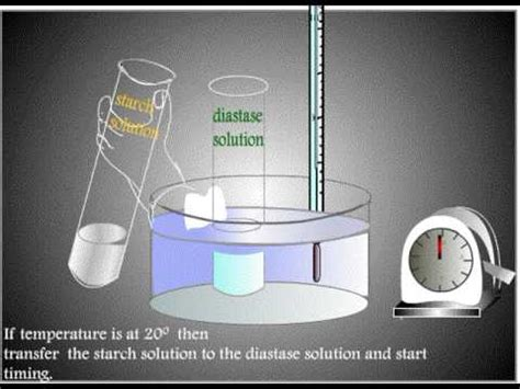 design experiment enzyme activity experiment to find effect of temperature on rate of enzyme