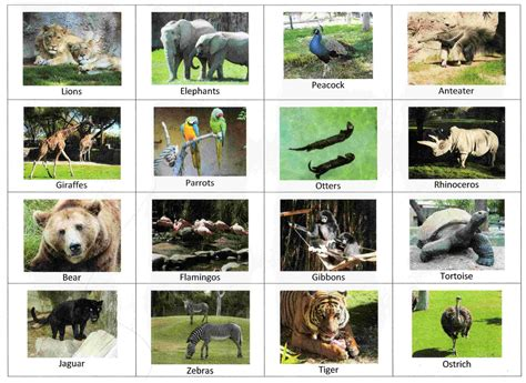 printable zoo animal cards 6 best images of zoo animal sorting card printables zoo