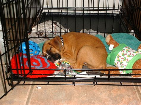 crate puppy crate back to basics thedogtrainingsecret