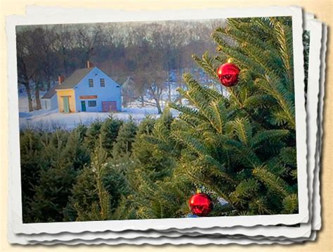 images of christmas tree scarborough maine christmas