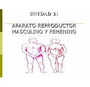 Esquema Aparato Reproductor Femenino Masculino Con Nombres Color