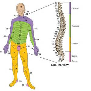 Injury To The Spinal Cord Images