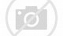 African Wild Animals Elephant