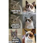 Grumpy Cat  ThemeForest Community Forums