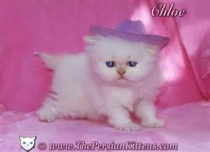 Persian_<strong>Kittens</strong>.jpg