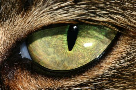 cat eye the strange of ingram part 1 the basic