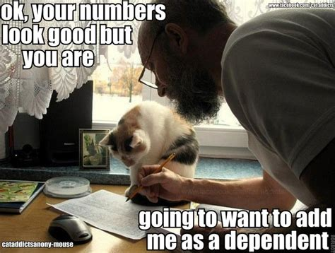 Accountant Dog Meme - 236 best wall photos images on pinterest kitty cats cat