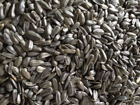 25kg black sunflower seeds bird food bird