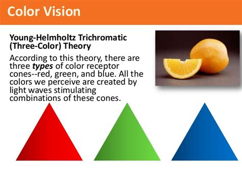 according to the trichromatic theory of color vision psy 150 403 chapter 6 slides