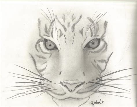 animal sketch 1 tiger by cjwhit on deviantart