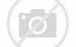 Beautiful Orange Bird