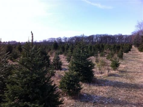 ide christmas tree farm opens friday woodridge il patch