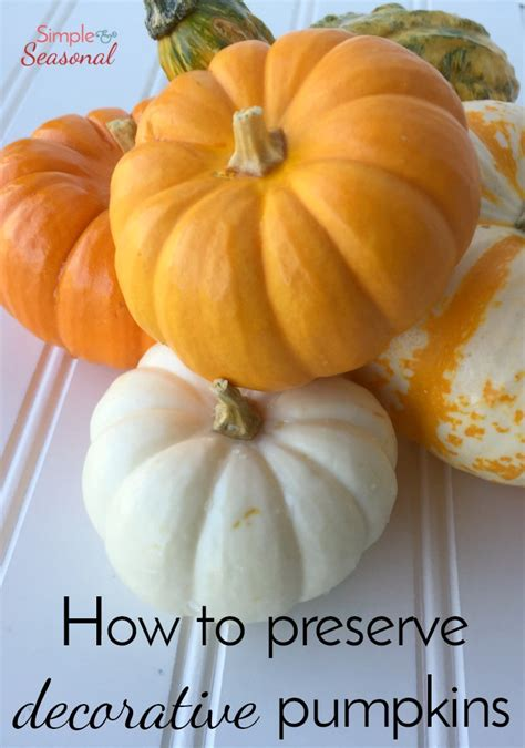 how to preserve a whole pumpkin 28 images 17 best